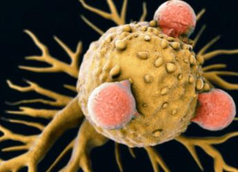 E stata identificata una nuova cellula T che promette di uccidere tutti i tipi di cancro