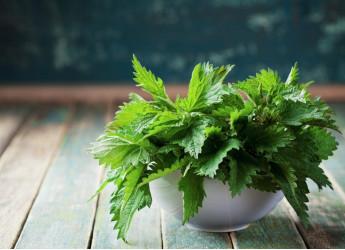 Ortica, una pianta ricca di benefici