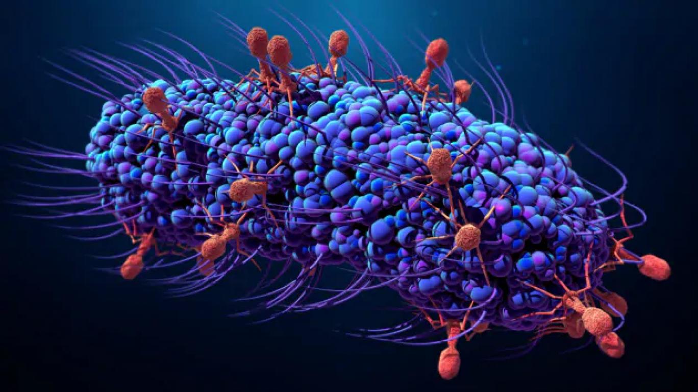 la logica: NTI-CRISPR perche non ancora viene implementata?