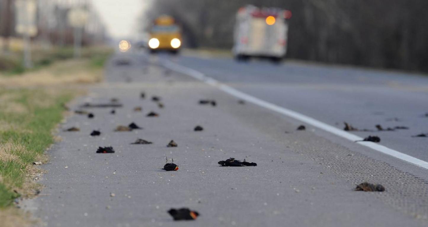 Centinaia di uccelli morti durante test antenna 5G