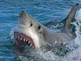 Dramma a Sharm El-Sheikh, squalo attacca turisti: 12enne perde braccio, la guida una gamba