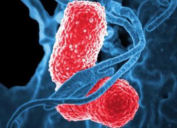 HIV, cura elimina per la prima volta il virus con 'taglia-incolla' del DNA e antiretrovirali