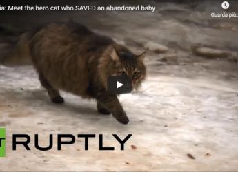 Un Neonato Abbandonato Rischia Di Morire Congelato. Ma Un Gatto Randagio Lo Salva!